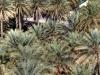 Villa inmitten eines grünen Palmenhains, Oman