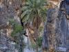 Palme und Felsen im Wadi Bani Awf