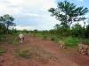 Spaziergang mit Löwen-min
