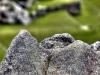 In Stein gehauen: eine Abbildung von Machu Picchu in Stein