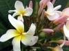 hawaii_2006_091