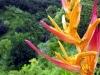 hawaii_2006_113
