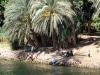 Ägypter leben und baden am Nilufer. Die Menschen hier leben noch wie vor HUndert Jahren. Foto: www.nikkiundmichi.de