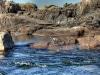 Ein Fischreiher schaut nach beute. Der erste Katarakt im Nil: Katarakte sind die Stromschnellen, die Ägyptens großem Fluss Geschwindigkeit verleihen. Foto: www.nikkiundmichi.de