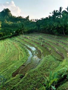 Reisterrassen auf Bali. Foto: www.nikkiundmichi.de