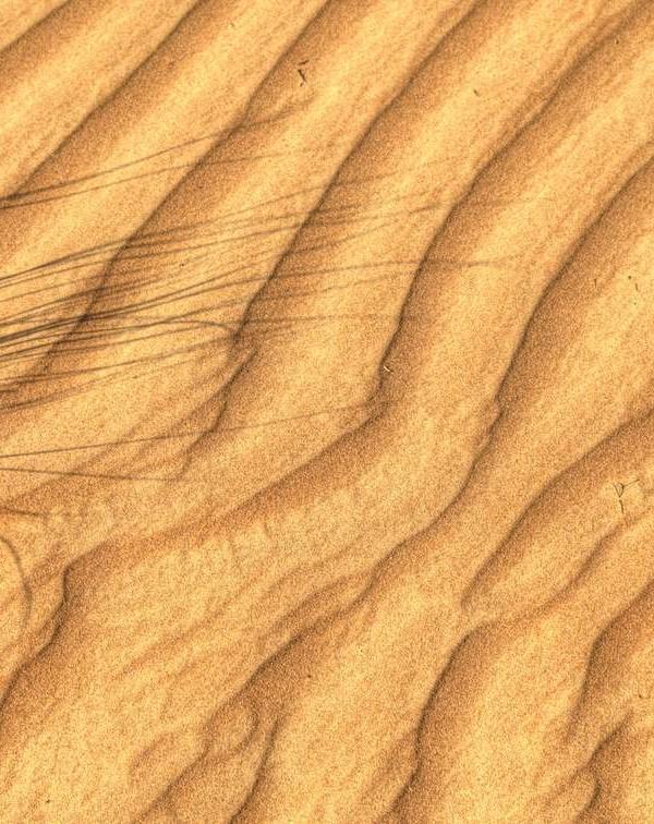Wahiba Sands Düne