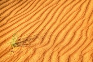 Die Wüste Wahiba Sands im Oman ist eine Bilderbuch-Wüste in Sachen Sand und Strukturen.
