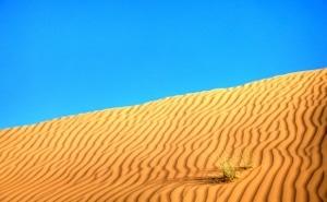 Die Wüste Wahiba Sands im Oman: starke Kontraste und die Reduktion auf das Wesentliche.