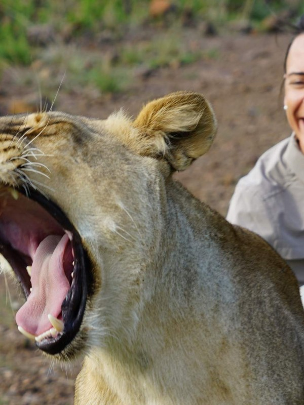 Lions Walk Zimbabwe Nikki Bralo