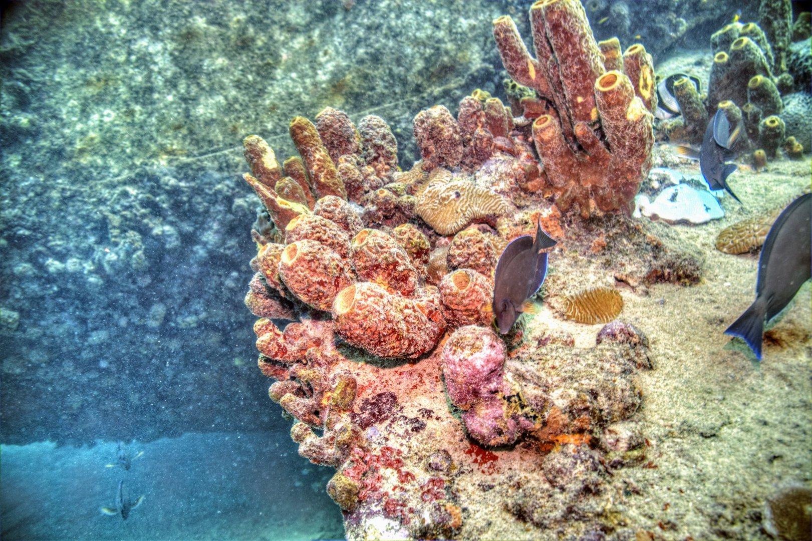 Wrack Tauchgang Antilla Aruba 03