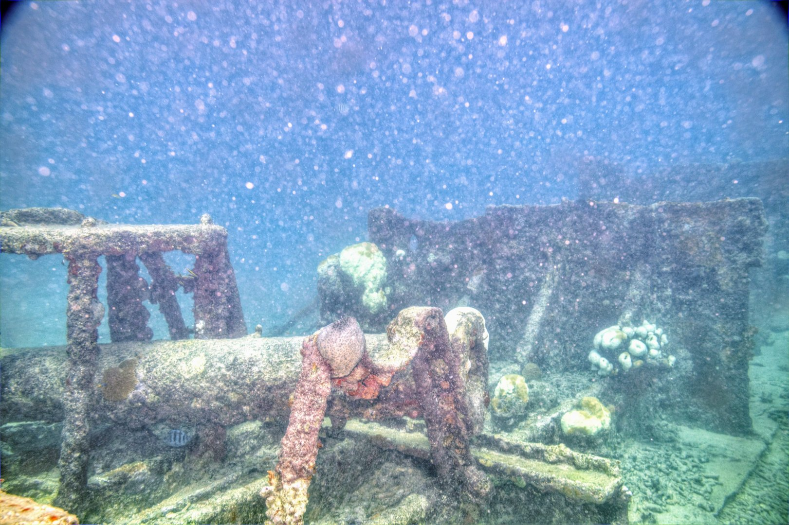 Wrack Tauchgang Antilla Aruba 10
