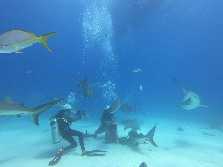 Beginn der Haifütterung