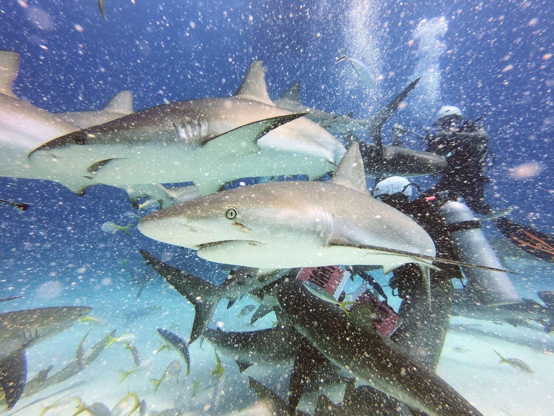 Haie Haifütterung Bahamas