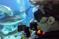 Haifütterung - Nikki filmt karibische Riffhaie