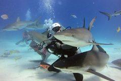 Ruhig bleiben beim Tauchen mit Haien