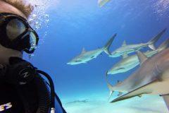 Tauchen mit Haien hautnah