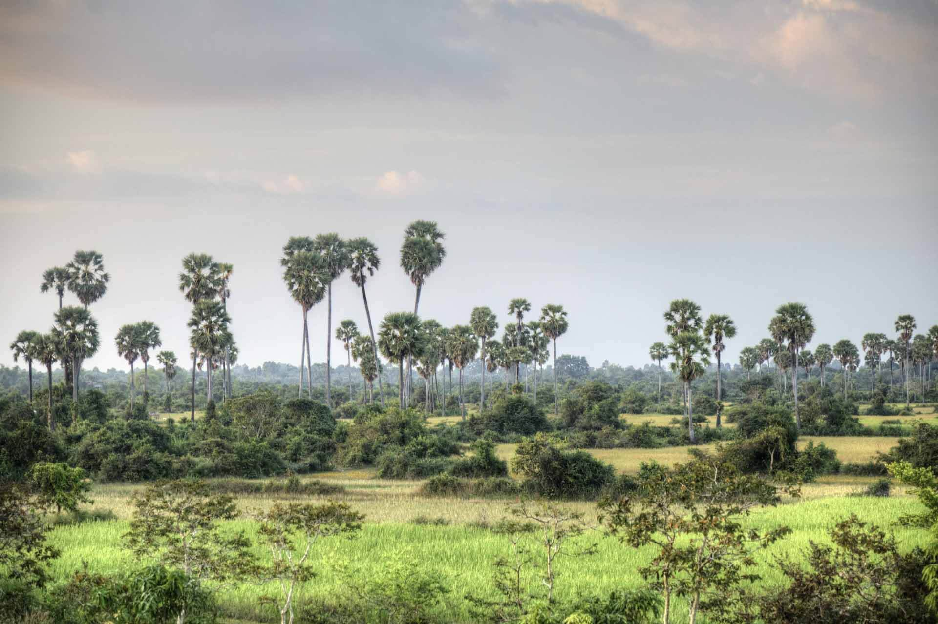 Kambodscha_Angkor_042