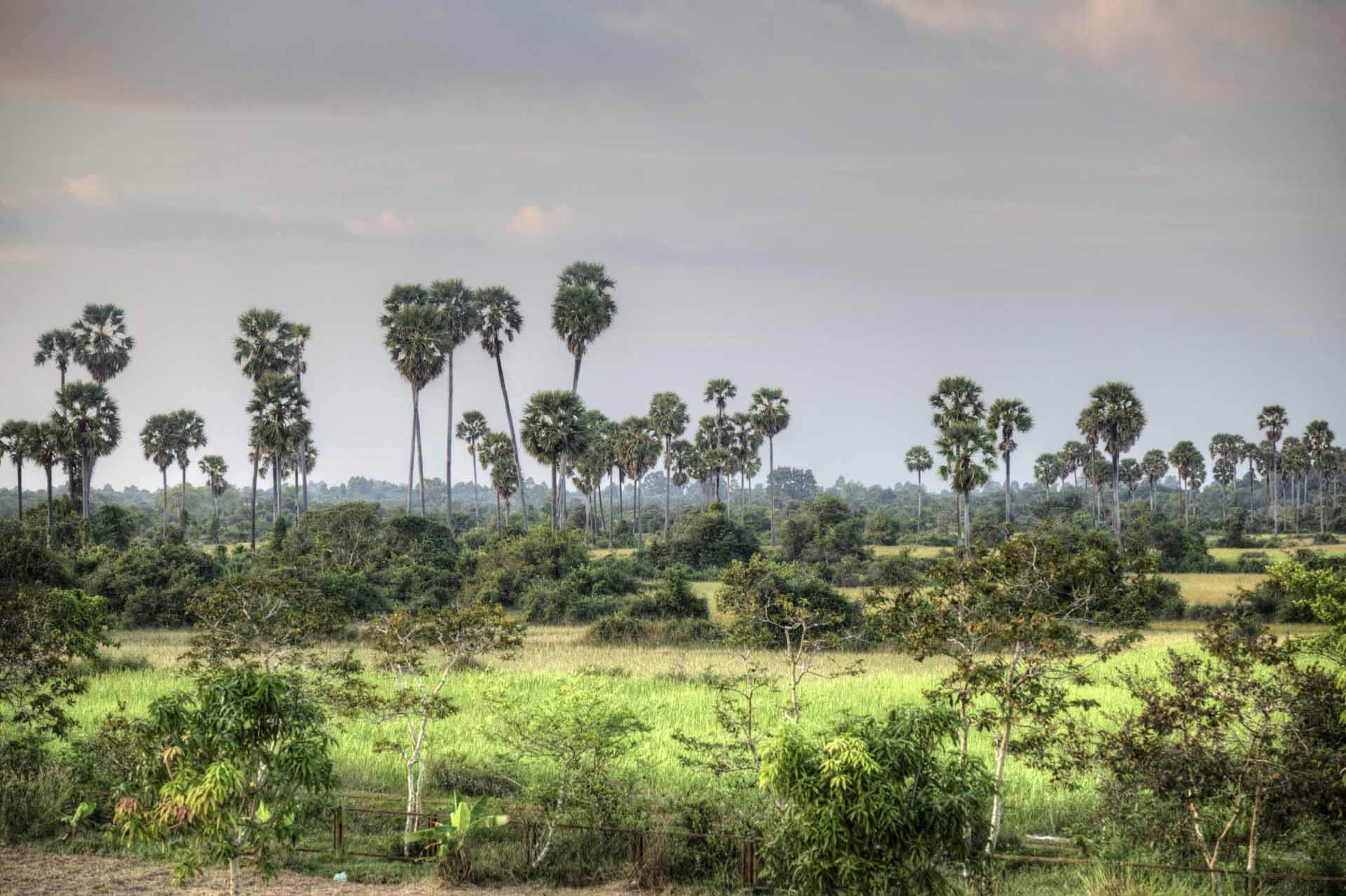 Kambodscha_Angkor_043