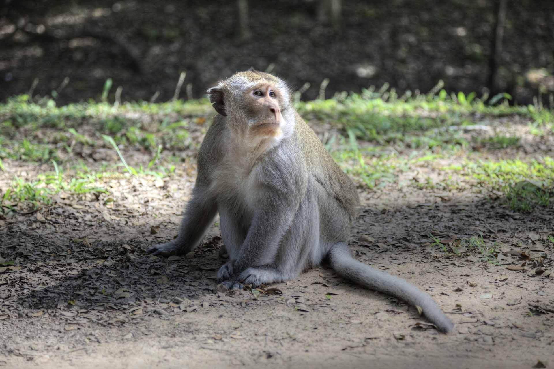 Kambodscha_Angkor_053