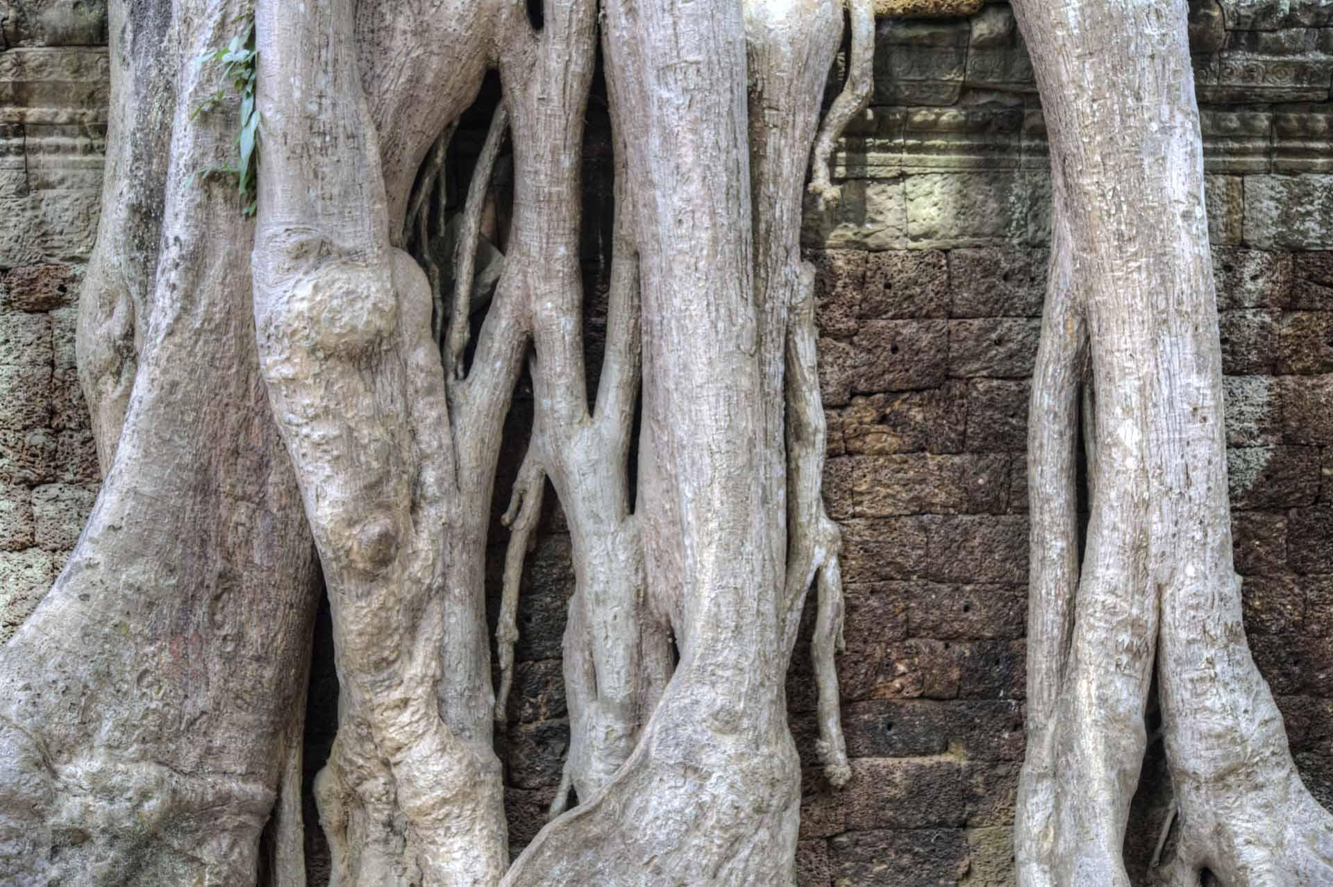 Kambodscha_Angkor_089