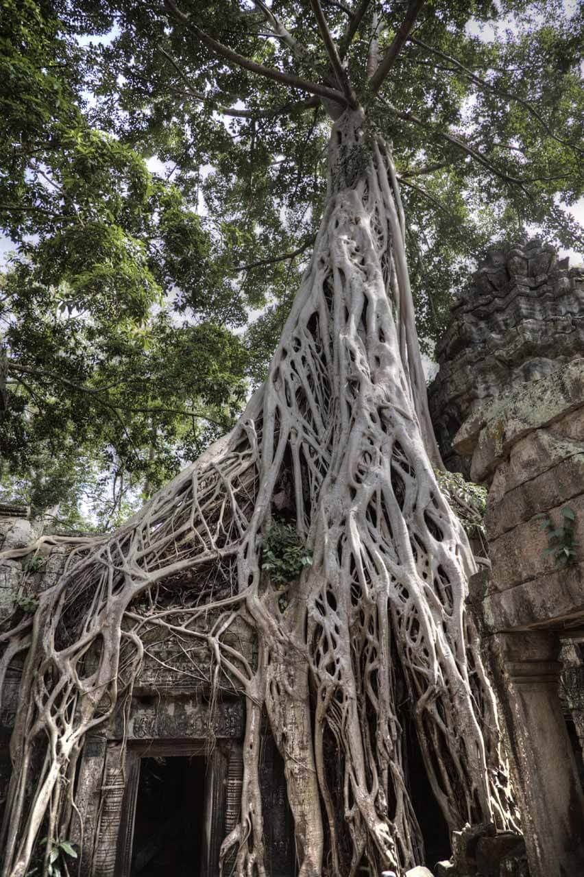 Kambodscha_Angkor_105