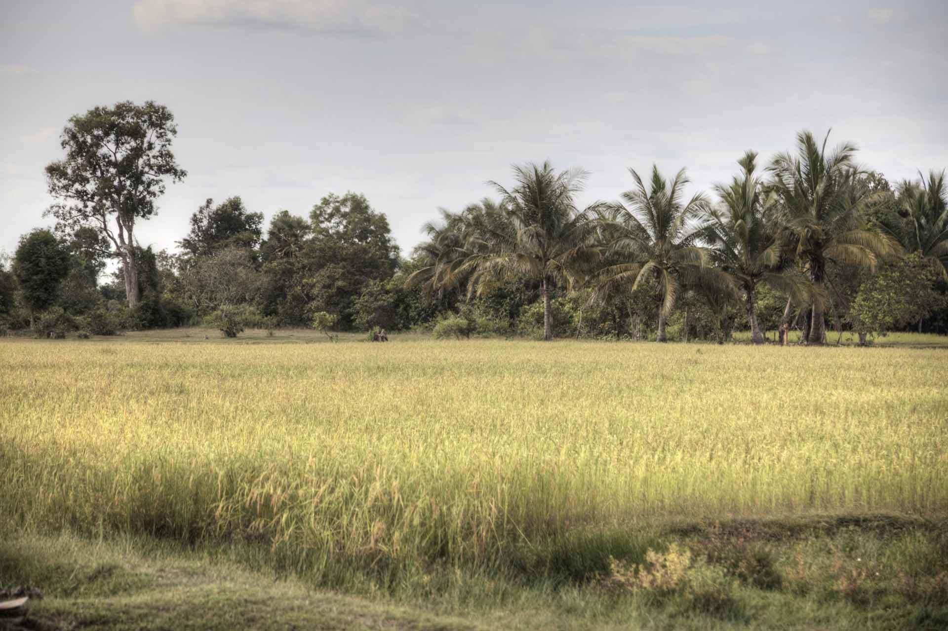 Kambodscha_Angkor_118