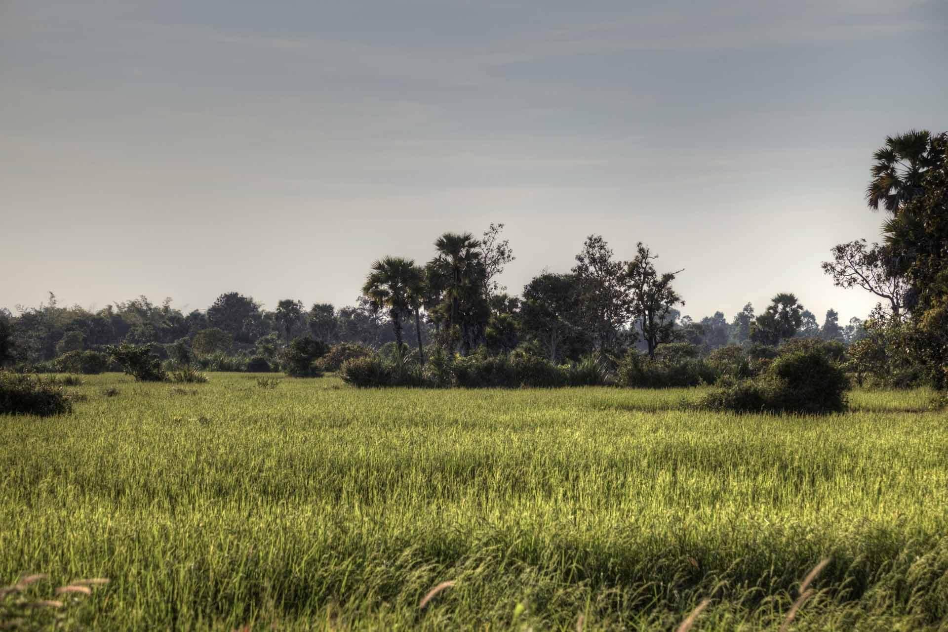 Kambodscha_Angkor_141
