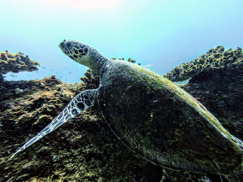 Tauchen Silhouette Island Schildkröte
