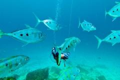 Tauchgang Silhouette Island Makrelen